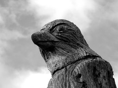 eagle (Quiet World) Tags: wood old sculpture wall wales barn moss eagle carving derelict afan countrypark argoed
