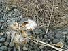 milkweed 2 (madriverrose) Tags: cassidy patricia bestnaturetnc06