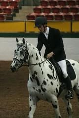 Sheik of Hallundbaek (uptonia) Tags: appaloosa horseshow stallion sheik dressage warmblood knabstrupper sporthorse sporthorsestallionexpo