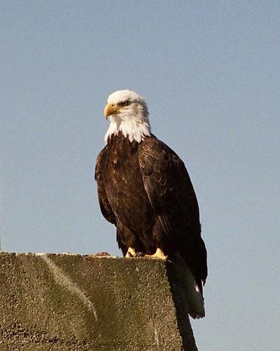 eagle010232
