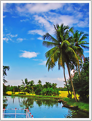Colors of Kerala 3 (plsssnraju) Tags: india nature water colors reflections landscape evening bluesky kerala palmtrees fields backwaters kumarakom greenfields naturecolors beautyofkerala backwatertrip