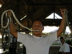 17 show serpenti