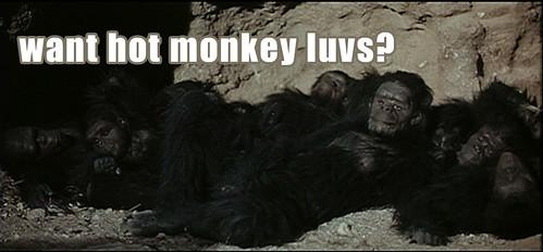 hot monkey luvs i has them