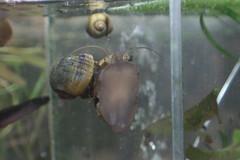 Snail by quinn.anya, on Flickr
