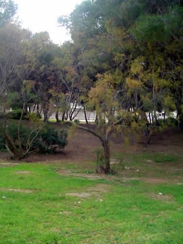 parque de La Ribera, Palma