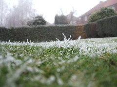 Frost on the grass 2 (V-C-T-S) Tags: grass frost hedges