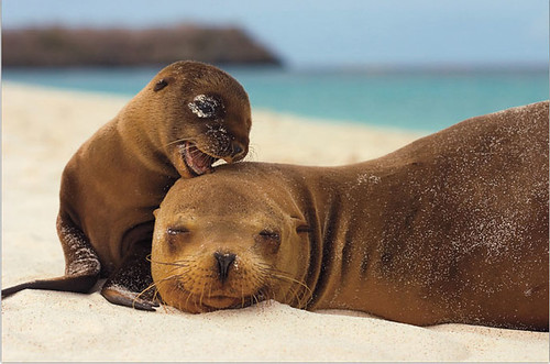 Seal Mother and Pup.jpg