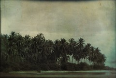 Samui Palms, Thailand (kekyrex) Tags: trees texture nature palms thailand asia scenic kosamui fakevintage