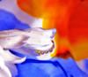 baby drops (jodi_tripp) Tags: blue orange white flower water drops daisy joditripp challengeyouwinner spring2008 wwwjoditrippcom photographybyjodtripp