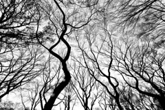 No Dark Sarcasm in the Classroom (Thomas Hawk) Tags: nyc newyorkcity trees blackandwhite bw usa newyork tree delete2 blackwhite unitedstates fav50 10 centralpark manhattan unitedstatesofamerica save3 delete3 save7 save8 delete save save2 fav20 save9 save10 save6 fav30 fav10 firstquality fav25 fav100 fav40 fav60 fav90 fav80 fav70 superfave natureshand savedbythehotboxuncensoredgroup