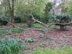 Dyrham Park 13.04.08144 (Sarah Bailey) Tags: park dyrham 130408