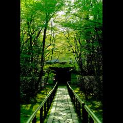 (Masahiro Makino) Tags: japan photoshop canon temple eos 50mm kyoto sigma adobe  f28 lightroom daitokuji  kotoin   40d 20080503163929canoneos40ds25p
