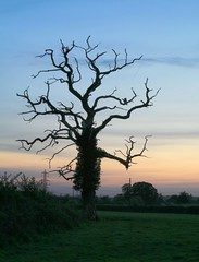 Witchy Tree