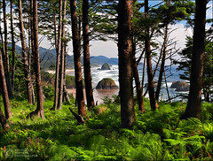 Beach Through the Trees (Zack Schnepf) Tags: ocean park trees sea summer usa green beach oregon forest canon state ferns haystackrock ecola seastacks