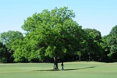 DSC_0599 (rich.reierson@verizon.net) Tags: golf papyrus 2008 isis