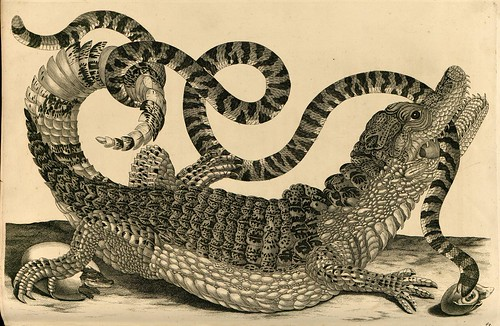 alligator by Maria Sibella Merian