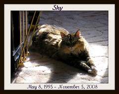 Shy - Rainbow Bridge