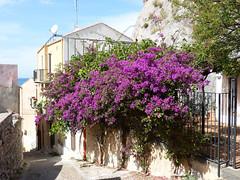 Cefalu, Virágos utca (ossian71) Tags: olaszország italy italia szicília sicily cefalu városkép city utca street virág flowers