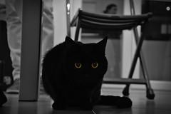 Book! (-Chiallonz) Tags: cat black noir blackcat pet cute nikon nikkor dslr 105 animal nature