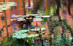 Giverny Remembered (~Kab) Tags: art waterlilies monet royalhawaiian sheratonwaikiki
