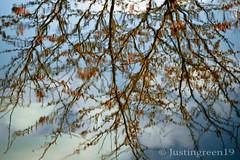 Spring Reflecting (justingreen19) Tags: uk pink blue sky cloud sun lake blur macro reflection tree nature water sunshine weather canon season landscape reflecting is suffolk spring movement pond branch blossom ripple fluffy sunny down 100mm sudbury swirl essex upside distort justingreen greatcornard justingreen19