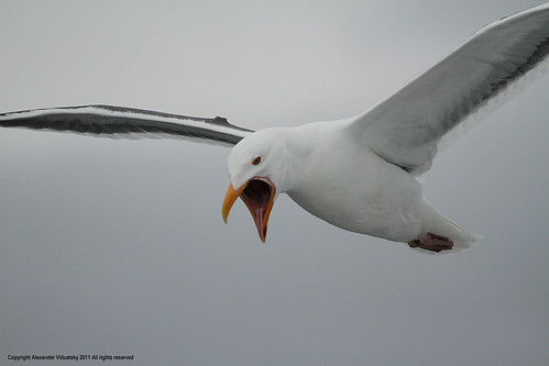 Meaning Of Dreams: Interpreting A Dream About Gulls | Dream ...