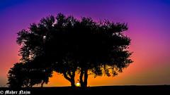 Dont let the sun go down on me (MNmagic) Tags: travel sunset sky tree raw sony riyadh a77 ksa ringexcellence dblringexcellence tplringexcellence riyadhprovince