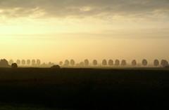 Morning (Harry Mijland) Tags: morning trees holland bomen utrecht nederland madrugada ochtend maarssen dearharry bethunepolder harrymijland