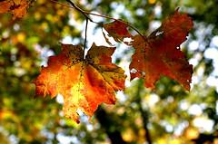 Fall Walk at Milton
