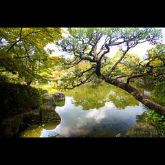 back from japan (DocTony Photography) Tags: travel lake plant tree green water colors japan creek canon garden japanese bravo kobe 5d relfection bff interestingness108 interestingness129 missyoutoo henyo aplusphoto doctony xoxoxoxoxoxoxoxoxoxox 24105is ehehehehehehe  seeyahlateralligatorehehe notyettotallyback tcalwaysxxxxx imsohappytoseeyou