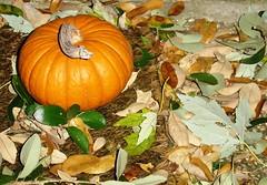 Fall...finally!