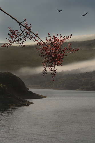 crystal springs autumn