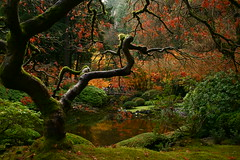 Fall Fantasia (sweber4507) Tags: autumn trees fall leaves oregon garden portland japanese eerie creepy spooky labyrinth pans anthropomorphic naturesfinest naturallandscapes utmtapjg treephotos excapture