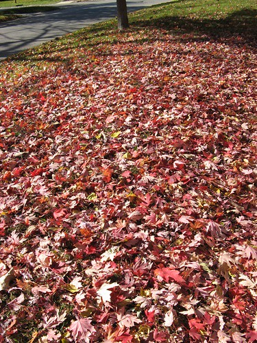 piles of leaves in lawrence