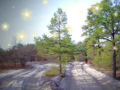 Two Way Traffic (BACKYard Woods Explorer) Tags: trees sparkles pinetree lights sand woods explore pinelands whitesand southjersey atsion novideo sparklies burlingtoncounty lateautumn photoshoppe woodsroad