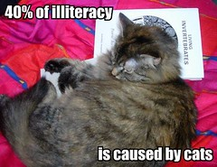LOLcat-40-of-illiteracy-is-caused-by-cat by Monado, on Flickr