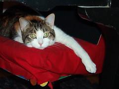 IM000280.jpg (semibold) Tags: animals lucy kitties