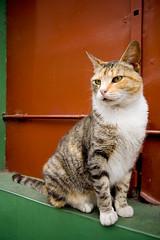 el gato 2 (poperotico) Tags: argentina cat geotagged calle buenosaires gato laboca rua caminito sigma1020