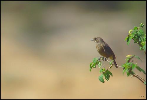 birdie_2