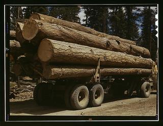 Truck load of ponderosa pine, Edward Hines Lum...