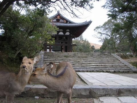 鹿のいる風景-鐘楼