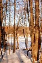 Morning Glow (Emmy Gee) Tags: morning trees winter lake snow ice peaceful forzen