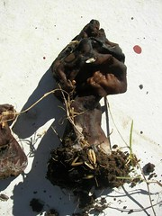 Weird mushroom