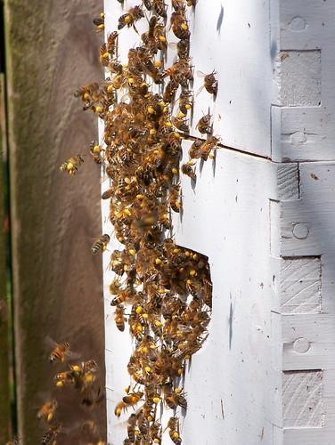 Tons of pollen