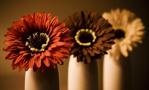 フリー画像| 花/フラワー|          フリー素材|