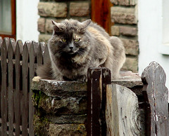 The cat from Bariloche (Mrcia_Marton) Tags: cat bravo kat chat gato katze gatto theunforgettablepictures theenchantedcarousel