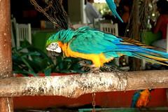 Nice parrot (jmven) Tags: bird canon rebel venezuela parrot margarita isla guacamaya venezolana mosquera xti goldstaraward