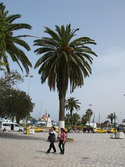 Sousse (Nicu Tatulescu) Tags: africa tunisia palmtree sousse