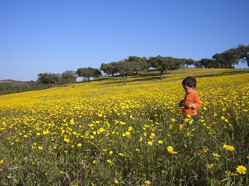 Roberto entre flores en mayo