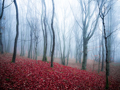 (Nikola Ostrun) Tags: tree trees fog foggy mist misty outdoor nature fall autumn autumncolors leaves branch forest